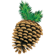 pinecone-favicon